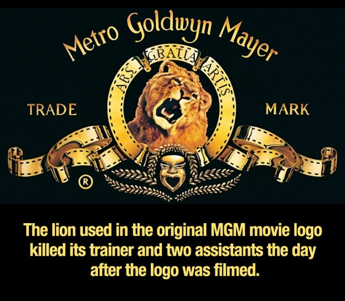 mgm lion killed trainer and assistants | SlayMyBoredom