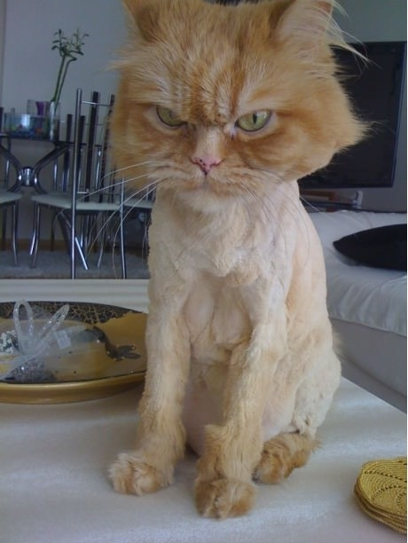 cat no hair painful slow death human