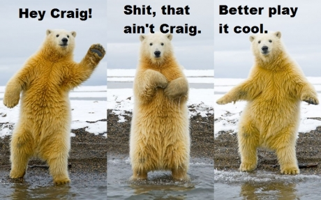 polar bear cool