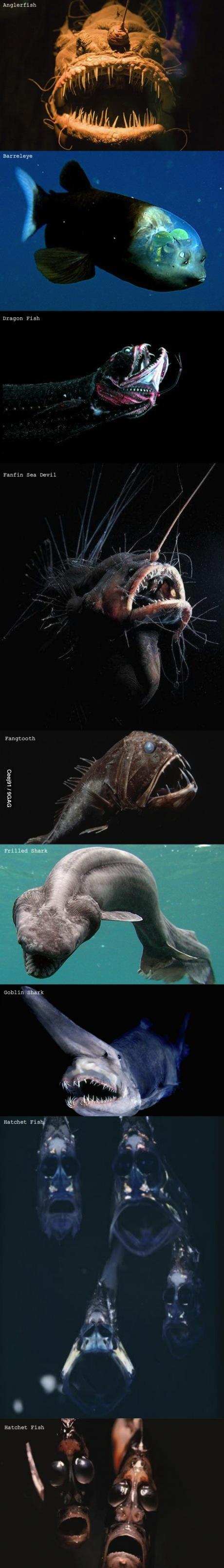 scray fish