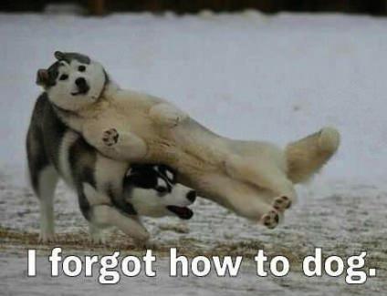 dog forgot