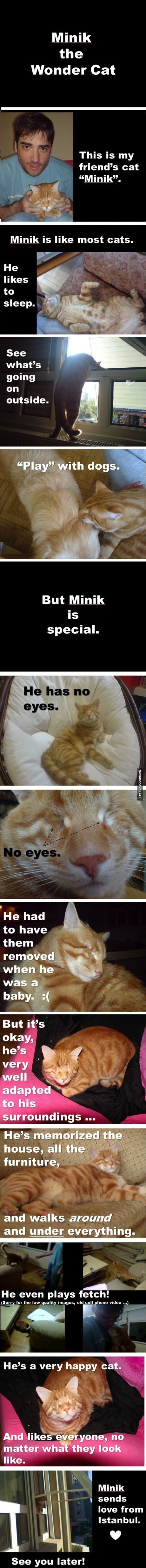 no eyed cat
