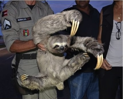 sloth kung fu