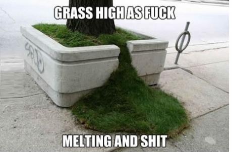 grass melting