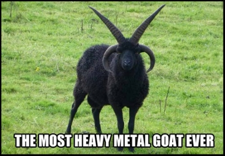 heavy metal goat