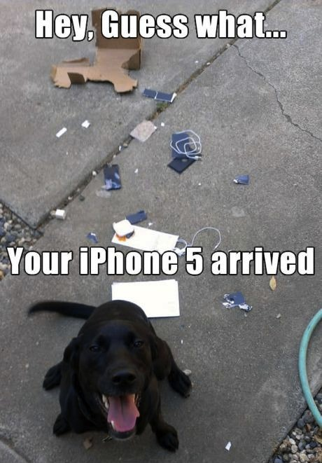 iphone 5 dog eat