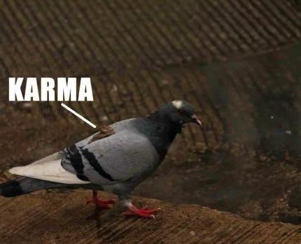 karma bird