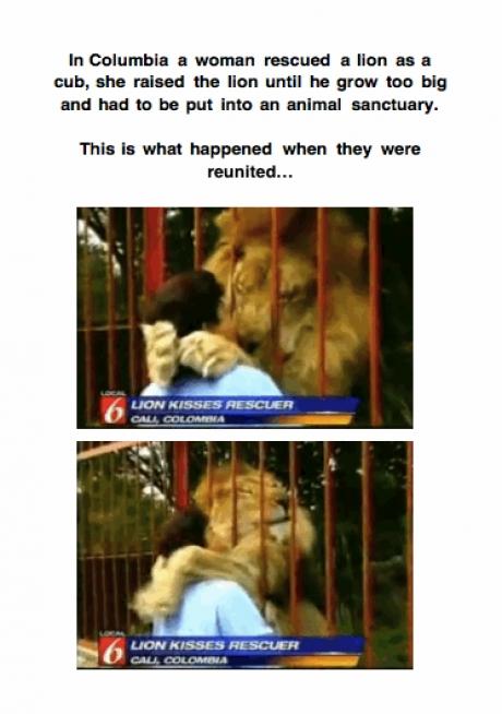 lion hug