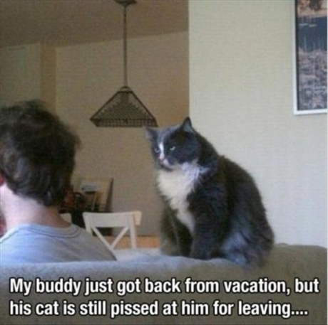 pissed cat