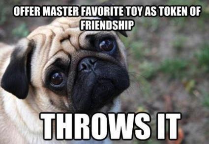 pug master