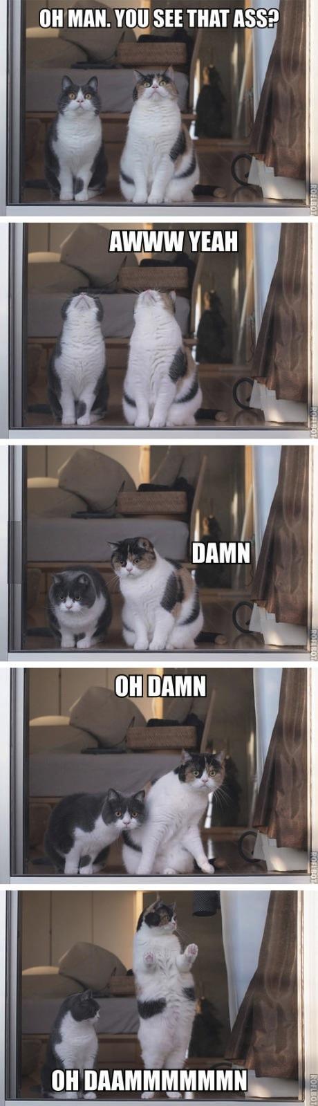 cat see ass