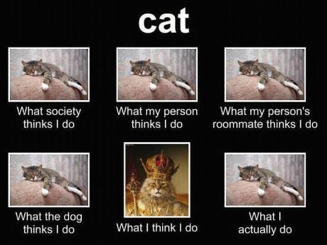 cats society
