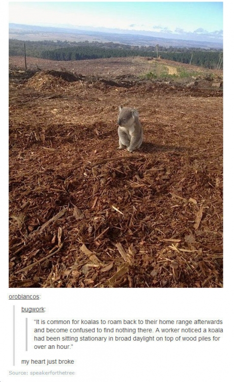 koala home