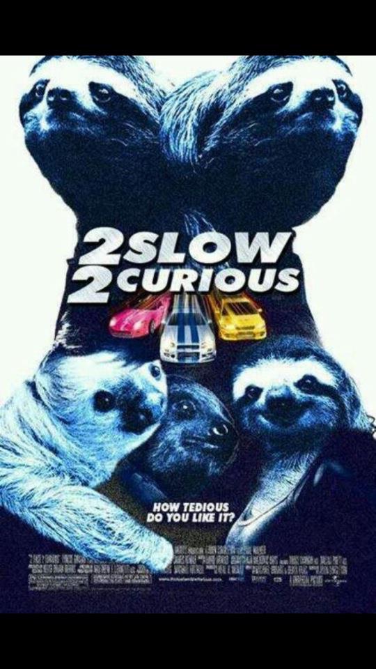 sloth curious