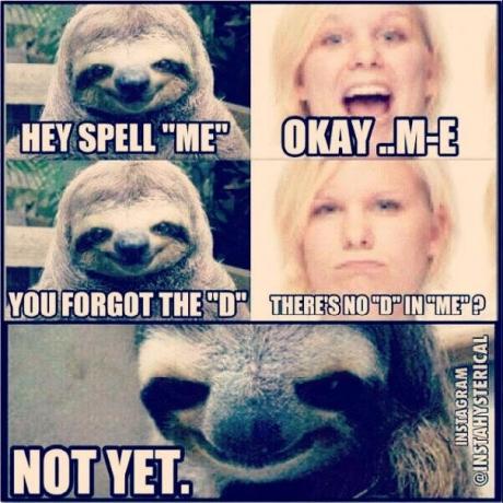 sloth d