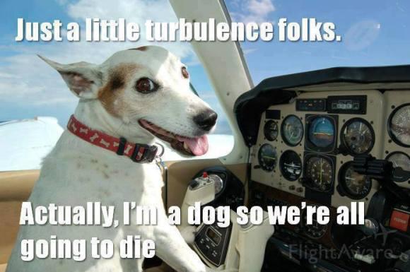 dog plane
