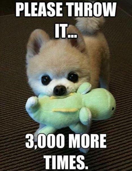 dog throw toy