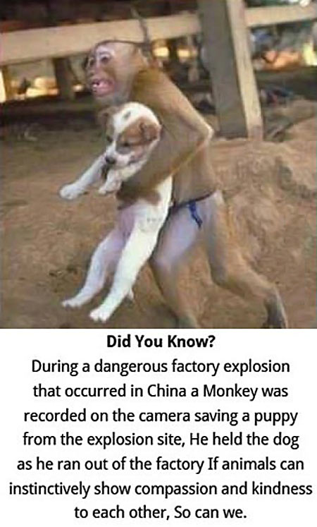 monkey save dog