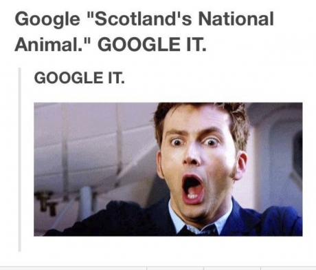 scot national animal