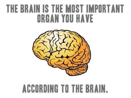 brain most improtant