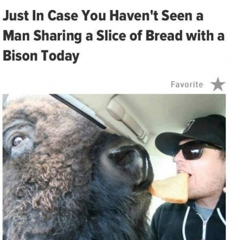 bread and bison