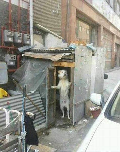 dog open door