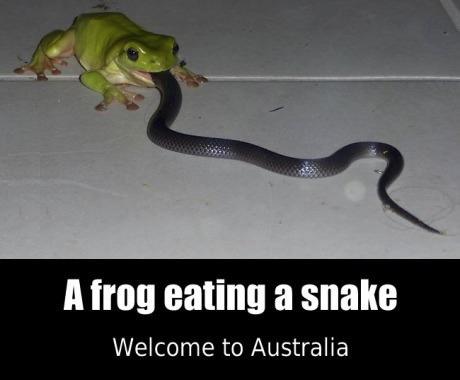 frog eat snake
