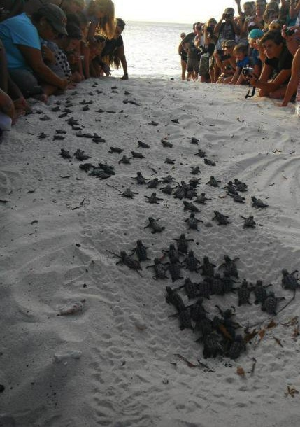 guide baby turtles