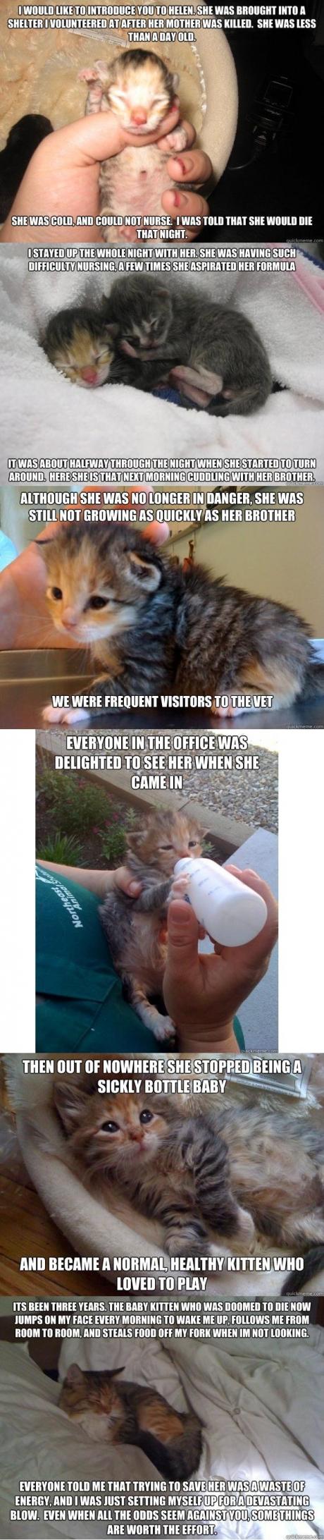 helen cat