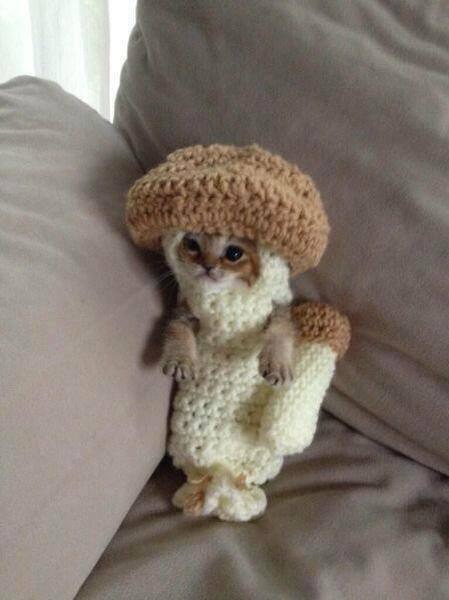 kitten mushroom