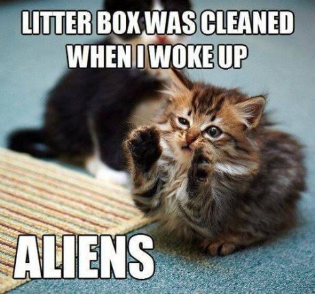 litter box cleaned
