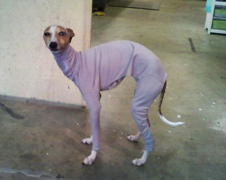 skinny dog costume